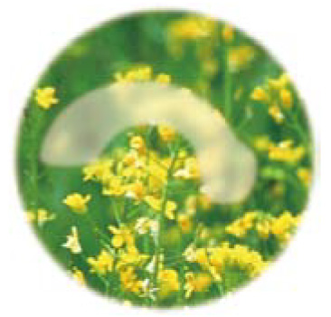 画像:初期の緑内障のイメージ