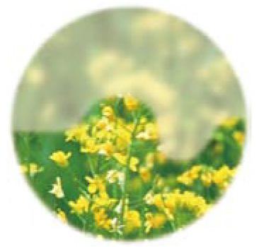 画像:中期の緑内障のイメージ