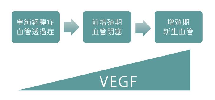 画像:VEGF阻害薬